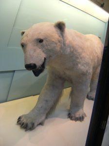 Natural History Museum - Mamíferos =)